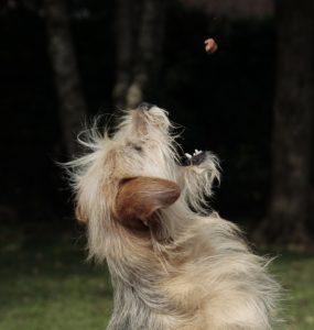 A kutyatáp rendelése egyszerű