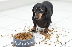 A felnőtt kutyatáp megéri az árát